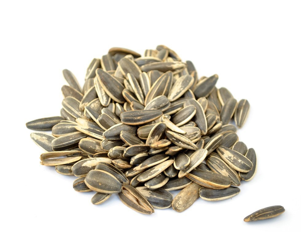 Exporting sunflower seeds to Europe | CBI - Centre for the Promotion