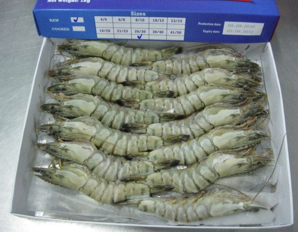 Exporting frozen cultured black tiger shrimp to Europe | CBI