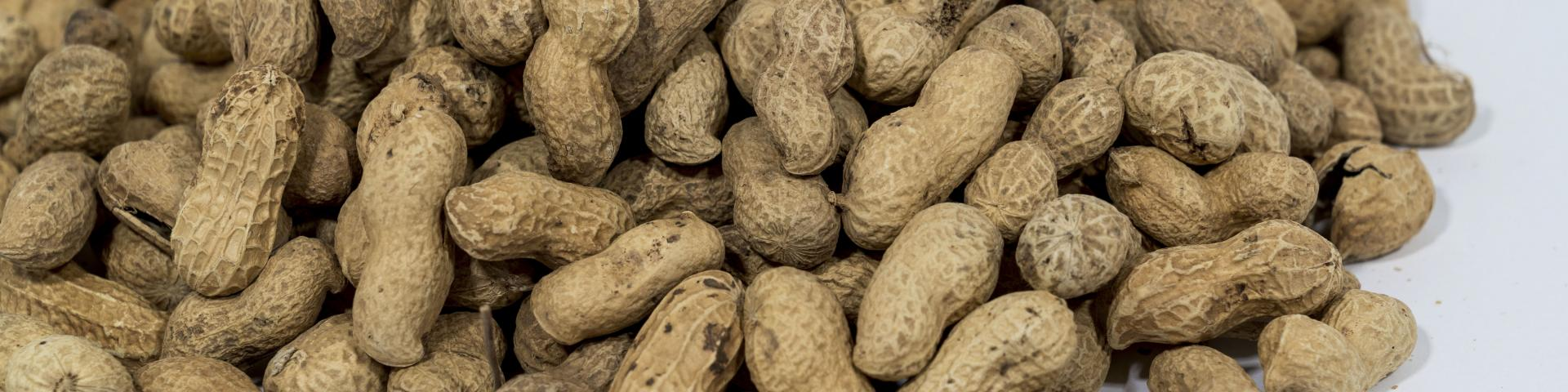 Exporting Groundnuts For The Food Manufacturing And Oil Crushing Industry In Europe Cbi Centre For The Promotion Of Imports From Developing Countries