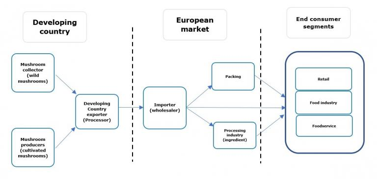 European market channels for dried mushrooms
