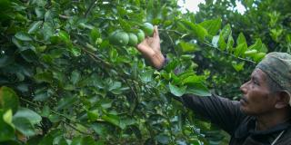 opportunities for Guatemalan fresh fruit company